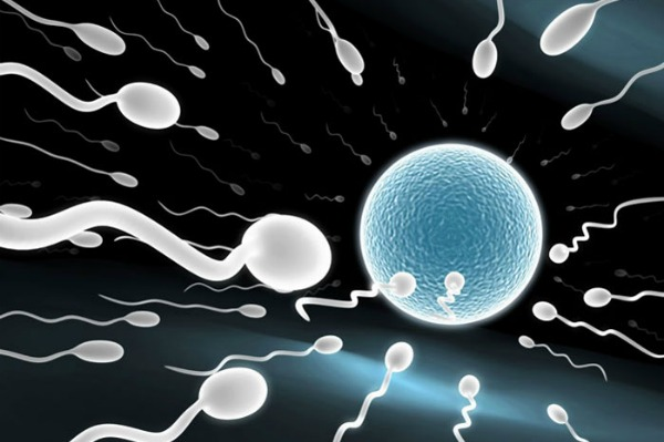 sperm meeting egg