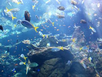 Virginia Aquarium Marine Science Center