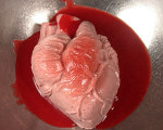 Anatomically Correct Strawberries and Cream Heart for Halloween