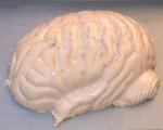 Igor's Pickled Brain Halloween Gelatin Mold Recipe