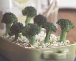 Mollie Katzen's The Enchanted Broccoli Forest