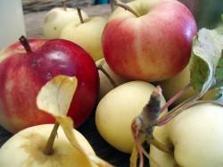 apple_2-250×187.jpg