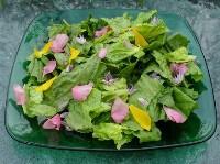 salad_n-200×149.jpg