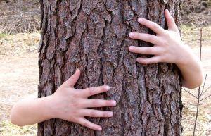 hug_a_tree