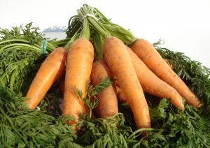 958451_carrot.jpg