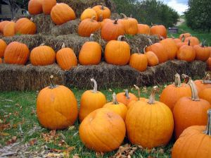 pumpkin_patch-halloween-safety.jpg