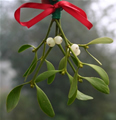mistletoe.jpg
