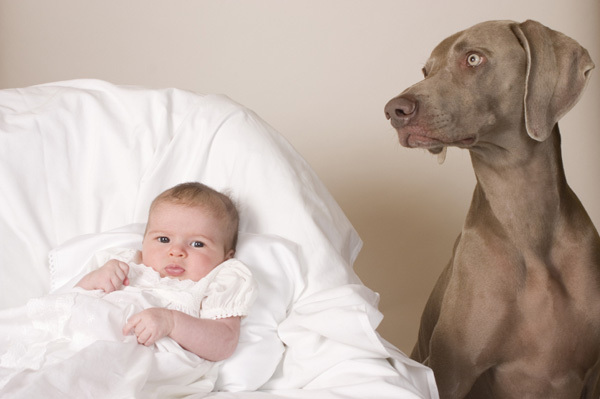 Dog Kills Infant Reminder To Take Care With Pets And Babies